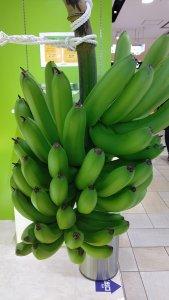 もんげーバナナの樹