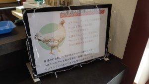 日南鶏の説明